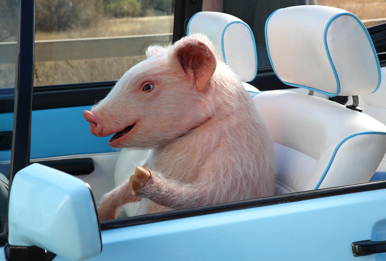 Friend Driving In Car